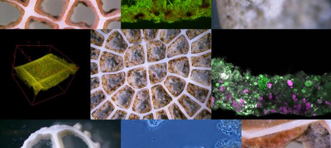 Nu startar BioFiAN – ett nätverk kring biofilmsprocesser